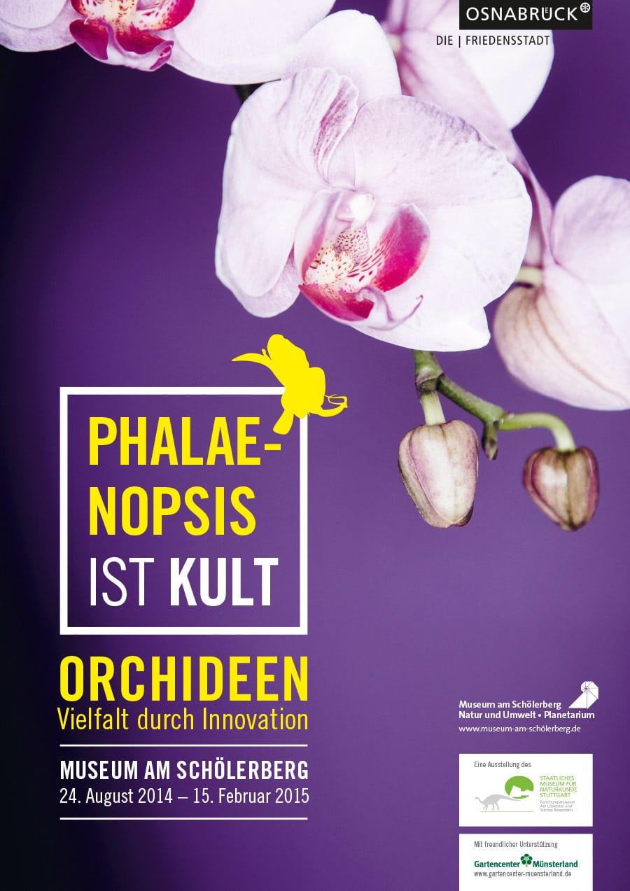 Phalaenopsis ist Kult 1