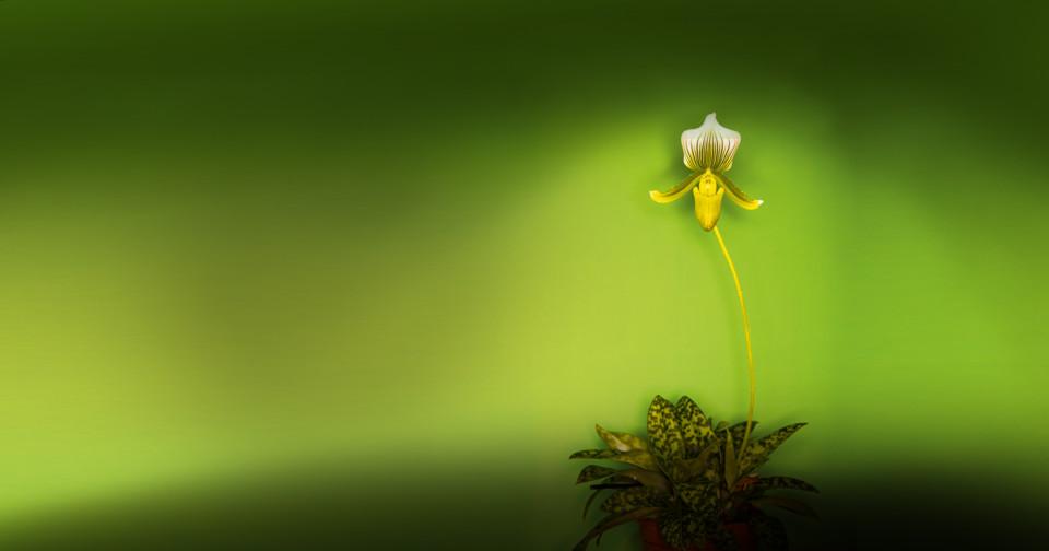 Orchideen am Schölerberg