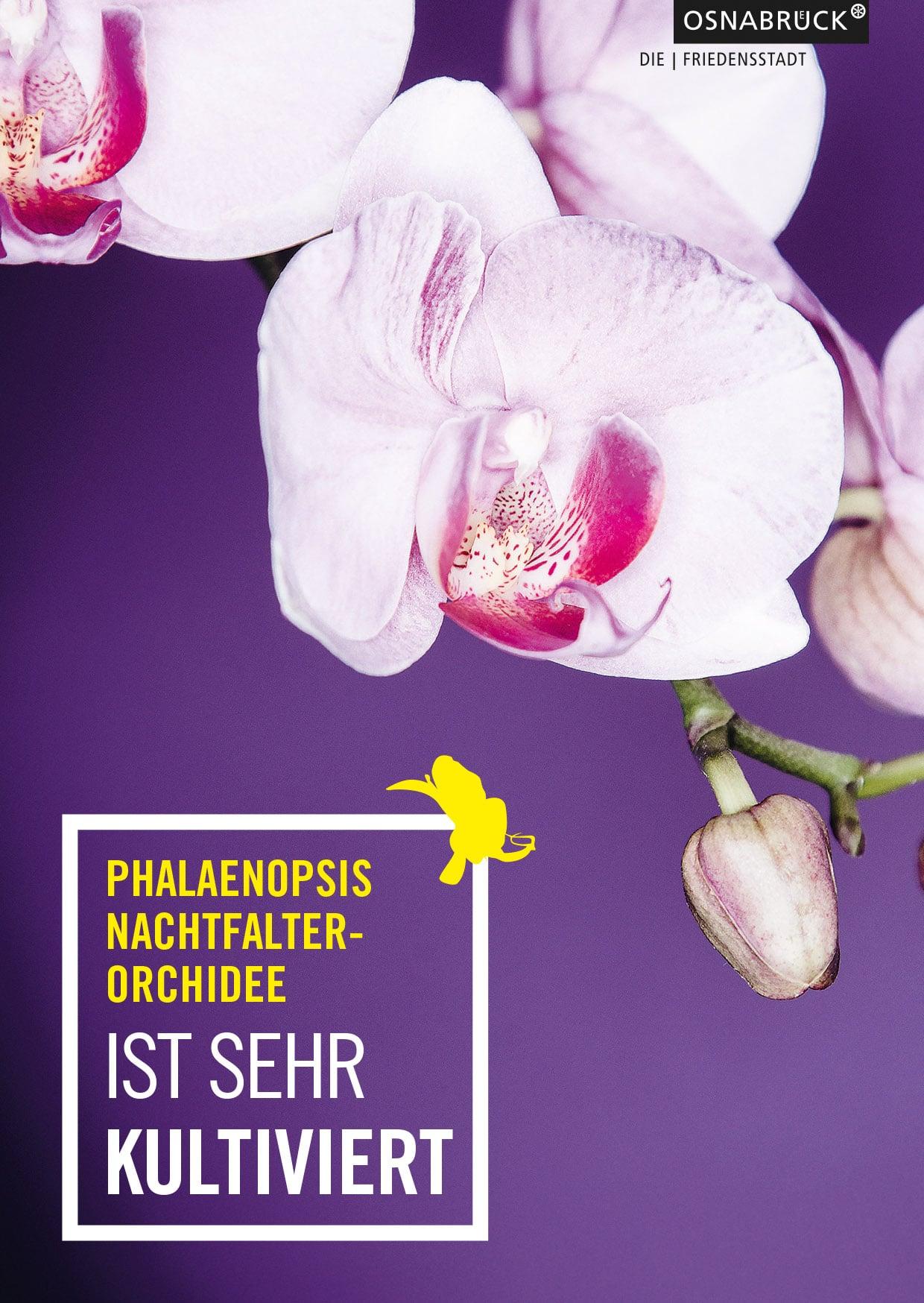 Design Postkarten für Orchideenausstellung in Osnabrück von der Osnabrücker Grafikdesignagentur Hasegold
