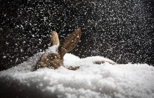 HASE im Schnee. Das Maskottchen der HASEGOLD GmbH wünscht ein frohes Weihnachtsfest.