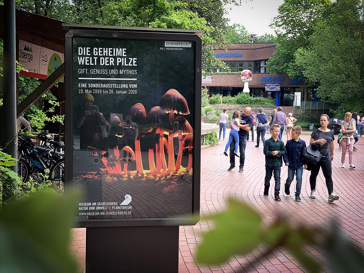 CITYLIGHT-PLAKAT /// Grafikdesign für Plakat zur Pilz-Ausstellung in Osnabrück
