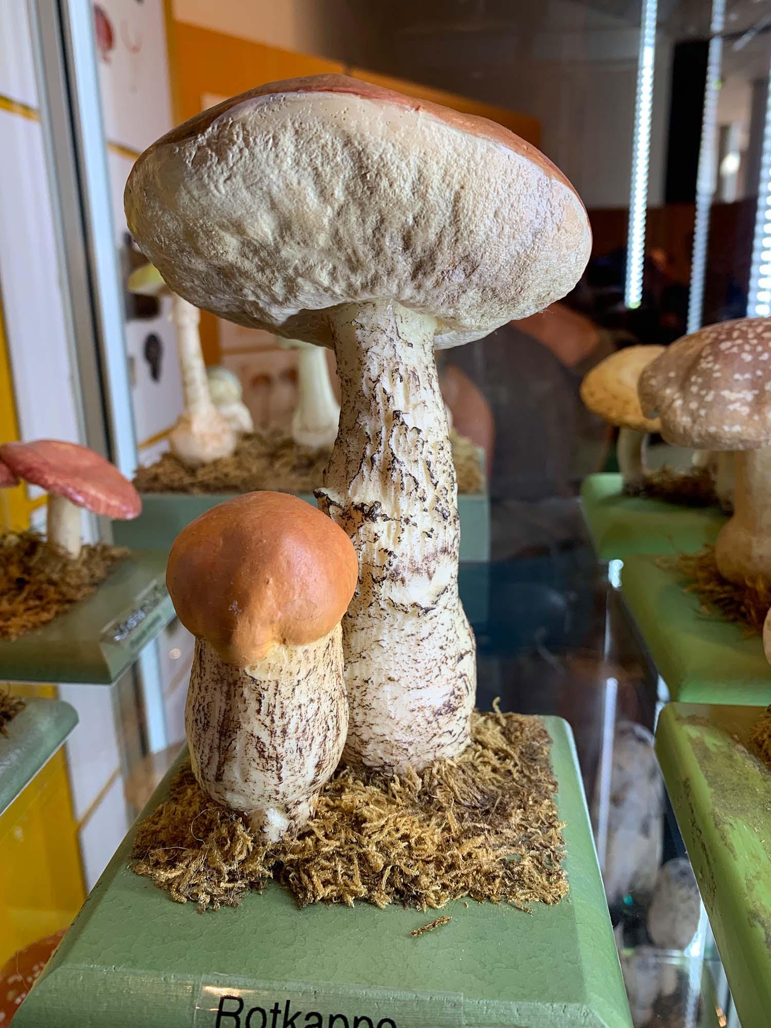Pilzausstellung 5