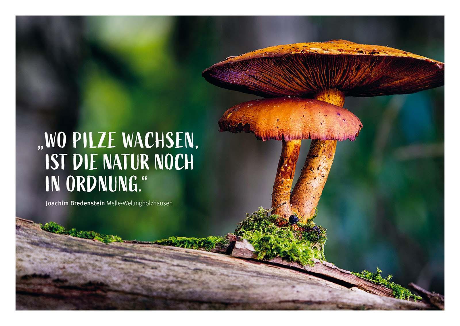 Postkarten Terra.vita /// Pilz aus dem Natur- und Geopark TERRA.vita. Die Typographie unterstützt die Fotografie.
