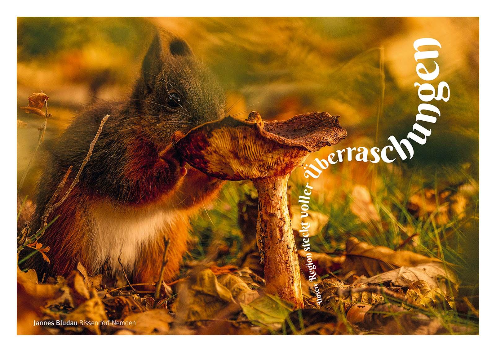 Postkarten Terra Vita: Die Osnabrücker Grafikdesign- und WordPress-Agentur Hasegold entwickelte die Postkartenserie für den Natur- und Geopark TEERA.vita.
